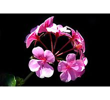 Pink Cluster Photographic Print