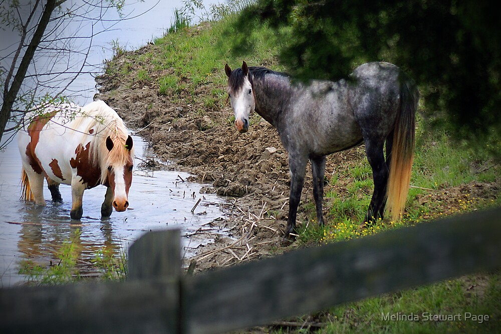 """Cooling Off On A Warm Spring Afternoon"" by Melinda Stewart Page"