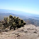 Cactus On Top of a Mountain-Big Bend by Bailey B.