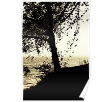 Tree at the Seaside Poster