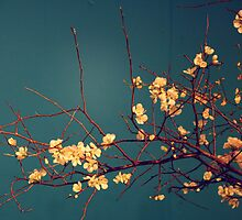 chineese blossoms. by emptyvacancy
