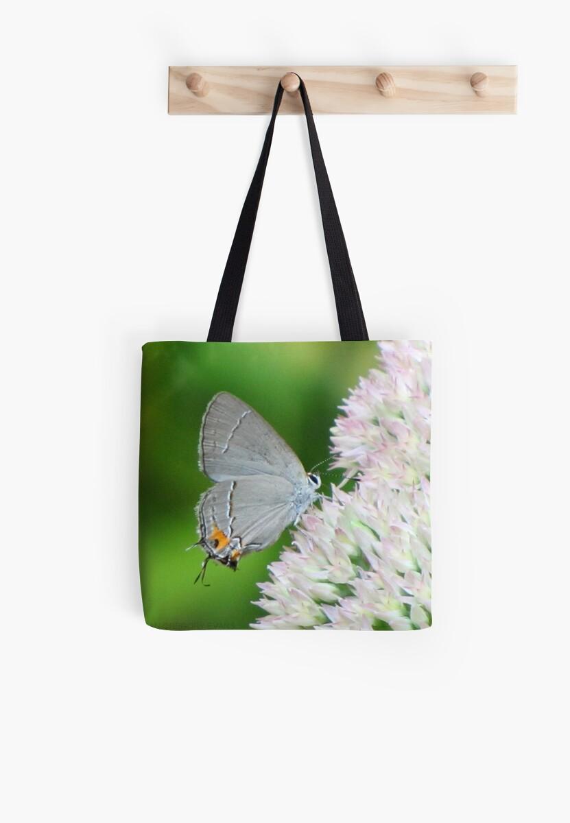 Delicate Gray Hairstreak Butterfly by Jean Gregory  Evans