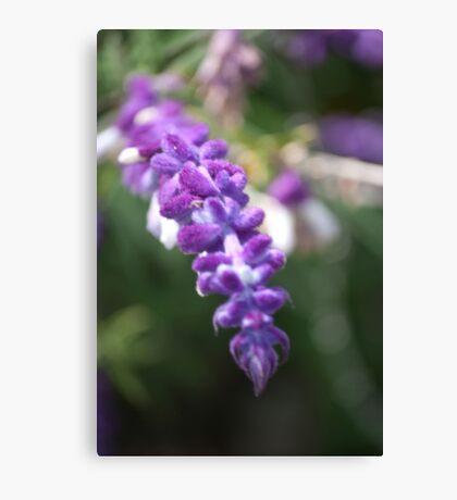 Lavender Salad Canvas Print