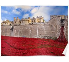 Tower Of London Poppy Display Poster