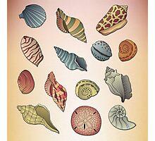 Seashell Pattern Photographic Print