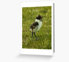 PLOVER CHICK Greeting Card
