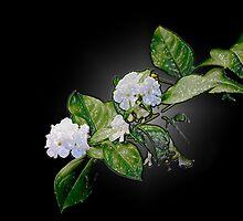 Flower Wrap by Kristine Kowitz