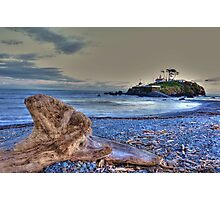 Drift wood  Photographic Print