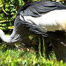 Beautiful bird by loiteke