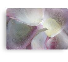 Morning Rose Petals Canvas Print
