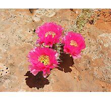 Escalante Cactus Photographic Print