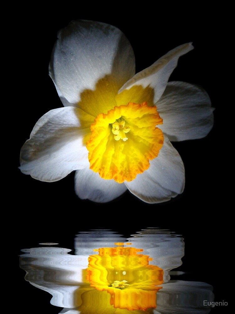 Reflection of a Daffodil by Eugenio