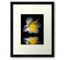 Reflection of a Daffodil Framed Print