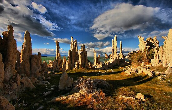 Mono Lake Garden by Barbara  Brown