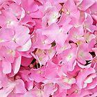 Pink Hydrangea by Caren