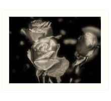 Champagne Roses Art Print