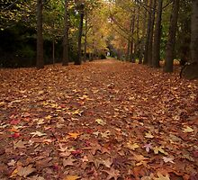 autumn's fall - mt wilson, blue mountains, nsw by Adam Smith