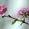 Blossom - (Plant Life Algae & Fungi Category)