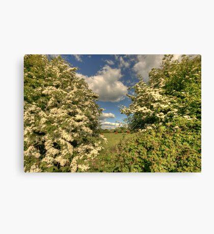 Whitethorn Hedge Canvas Print
