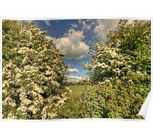 Whitethorn Hedge Poster