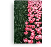 Color line - green&pink Canvas Print