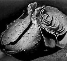ROSA NEGRA by FABIAN FARCY