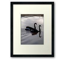 Mirroring Black Swans  Framed Print