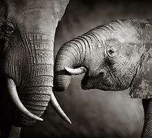 Elephant affection by Johan Swanepoel
