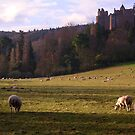 Dunster Castle - Somerset by Simon Groves