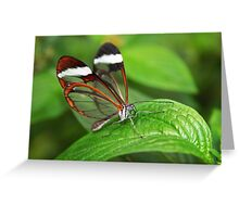 Greta Oto with Wings of Glass Greeting Card