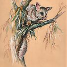 Brushtail Possum 2. by Norah Jones