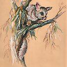 Brushtail Possum 2. by Norah Jones