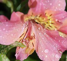 Wet flowers 2 by elmare