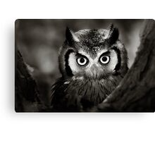 Whitefaced Owl Canvas Print