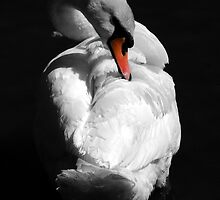 Swan by Samantha Higgs