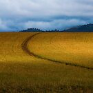 Gulgong field, May.  by Bill  Russo