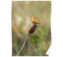 Lady Lycaena Phlaeas Poster