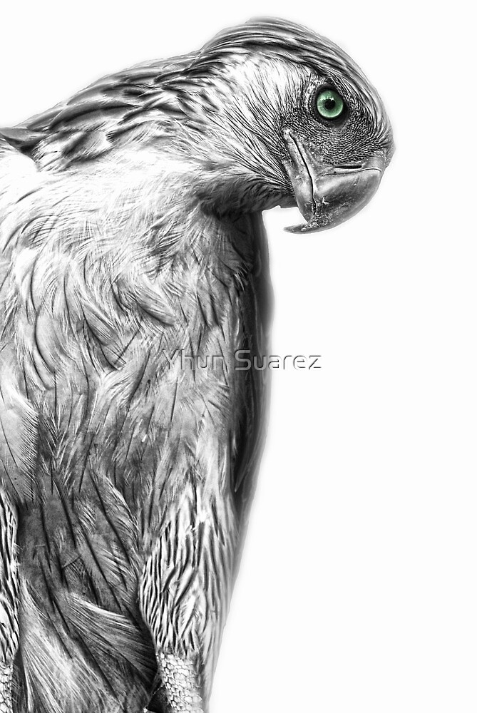 The Philippine Eagle by Yhun Suarez