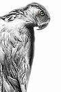 The Philippine Eagle by Yhun Suarez