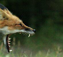 the Big yawn by Shell Spillenaar