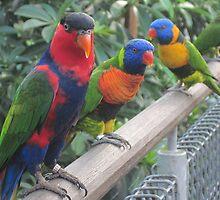 Colourful friends by Nupur Nag