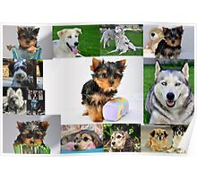 Canine Expressions Poster
