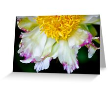 Peony - Alley Cat Greeting Card