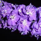 Bloom'n Marvelous by LBrammer