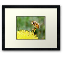 Touching a Golden Meadow Framed Print