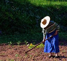 Gardening The Old Fashioned Way by Jeff Holbrook