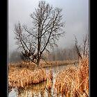 Misty Morning by stephcox
