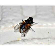 The Fly Photographic Print