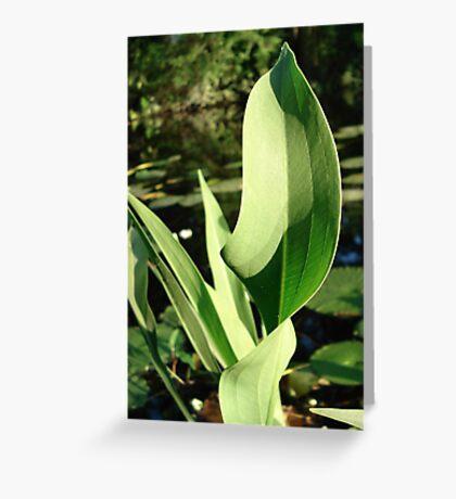 Duck Potato Foliage - light and shadow Greeting Card