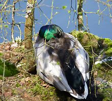 Enjoying the spring sunshine 2 by Photos - Pauline Wherrell